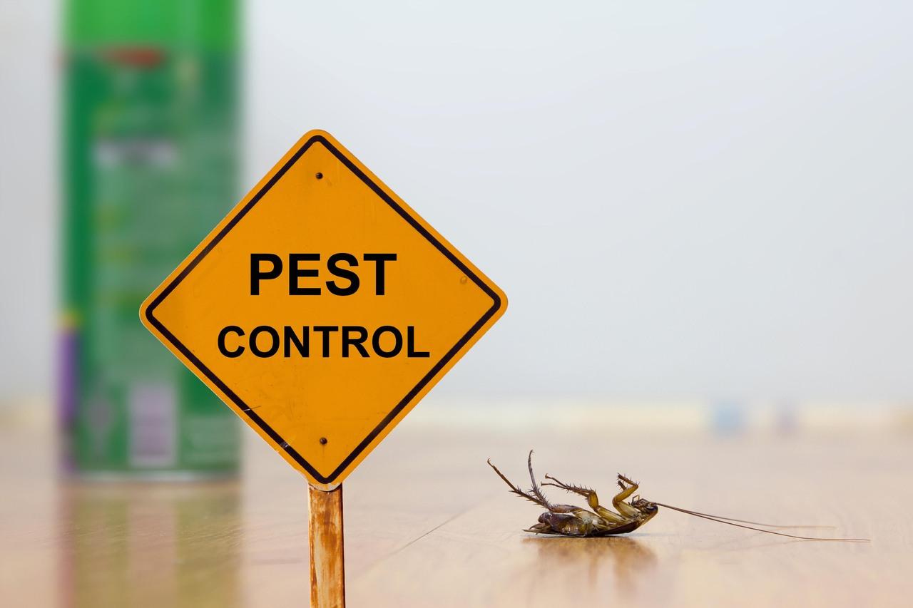 Everyday Pest Prevention Tips
