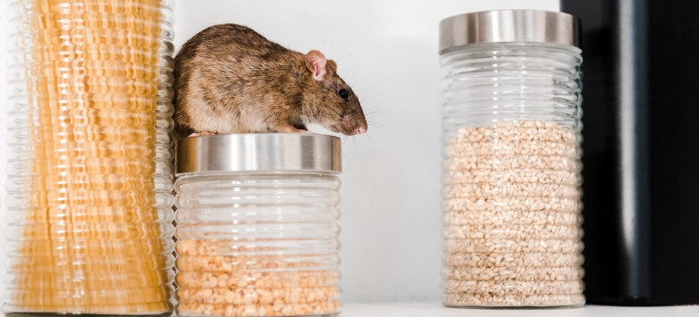 Pantry proof tips to prevent pest infestation