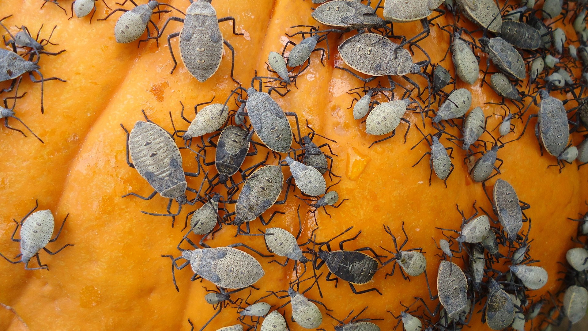 Fall bugs, Ants, pests to look for in the fall